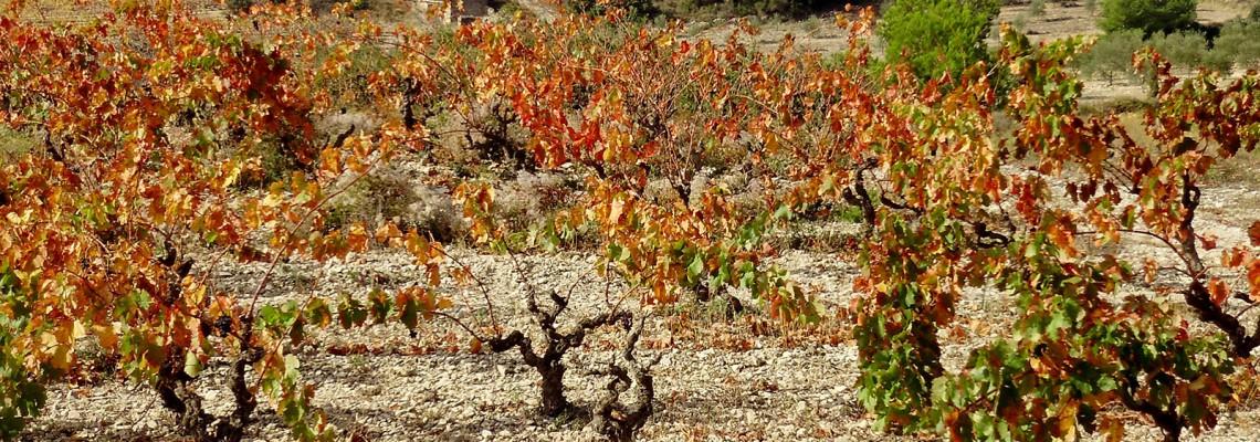 Vignoble Calamiac en automne